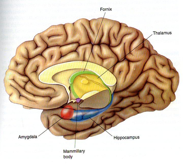 hersens van binnen